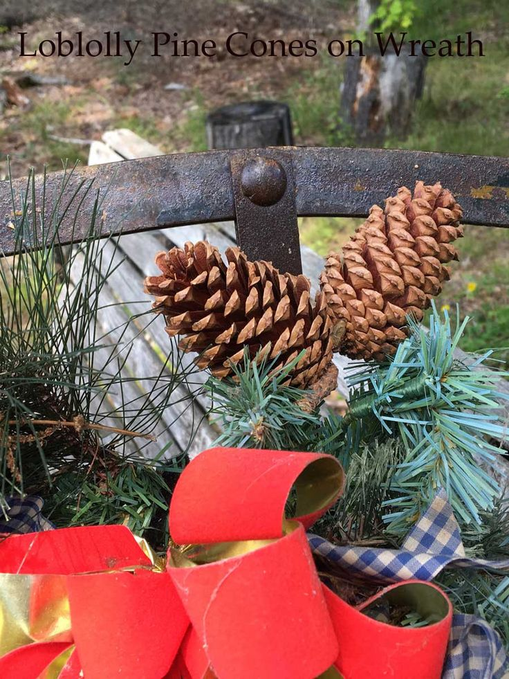 Loblolly Pine Cones For A Rustic Touch, Medium Pine Cone Are Perfect For  Rustic Weddings