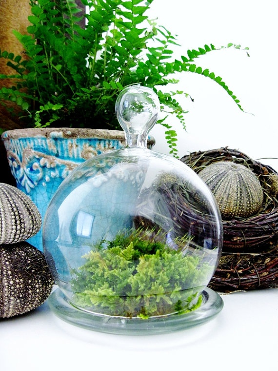 This Cute Hand Blown Glass Cloche (French For Bell) Planter Jar Houses Easy  To Care For Live Fern And Frog Moss. Create Your Own Miniature Landscape By  ... Part 49