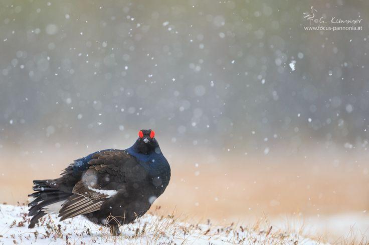 Snowfall by Gerhard Kummer on 500px