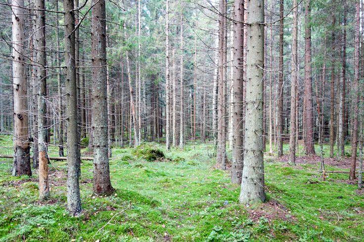 Sibbo National Park, Finland. More pics: malinlundsten.com/vandring-i-sibbo-nationalpark/