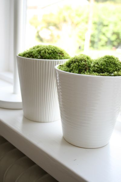 Pretty planted moss for inside. I wonder how much light it requires...hmmm