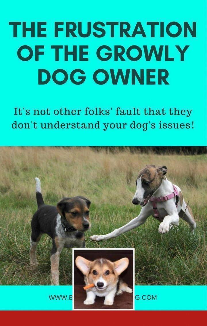 Aggression Dog Training Aggressiondogtraining Dog Training Dog