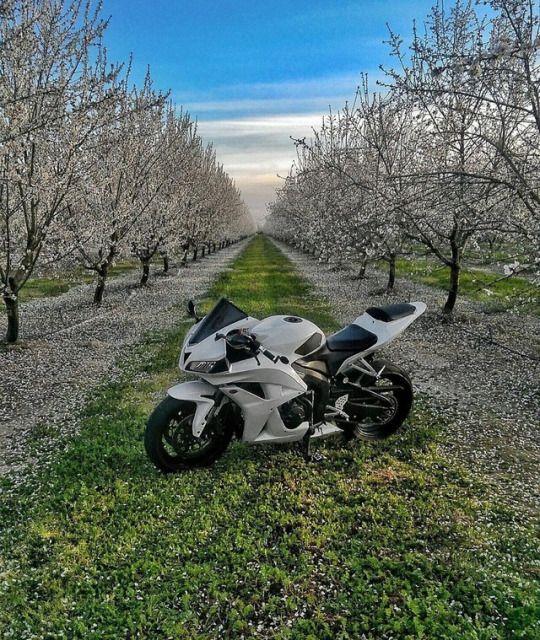 Honda CBR. Motorcycles, bikers and more