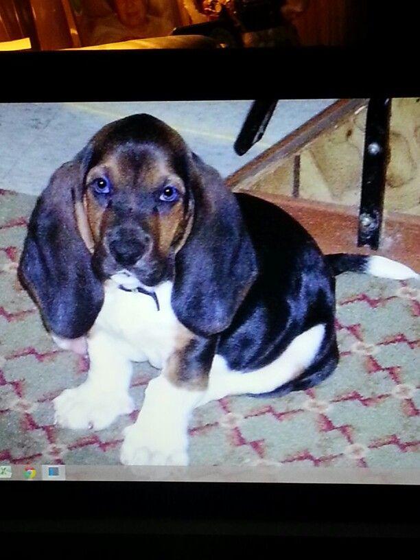 Puppy rufus!! :3
