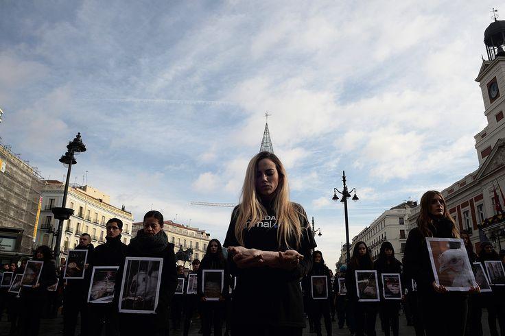 تصاویر   تجمع متفاوت فعالان دفاع از حقوق حیوانات در مادرید