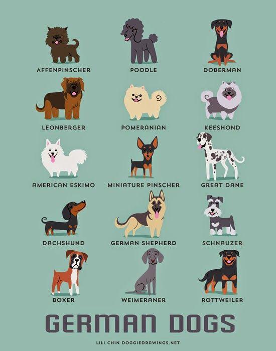 Guía canina ilustrada   No me toques las Helvéticas   Blog sobre diseño gráfico y publicidad