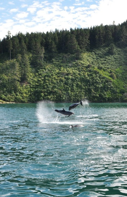 Swimming with Wild Dolphins in New Zealand