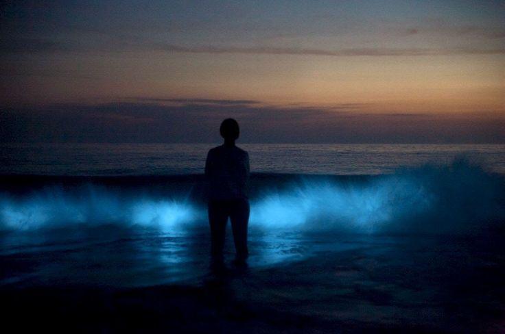 """Meeresleuchten vor Sylts Westküste"" #GlowingSeas , 发光的海"