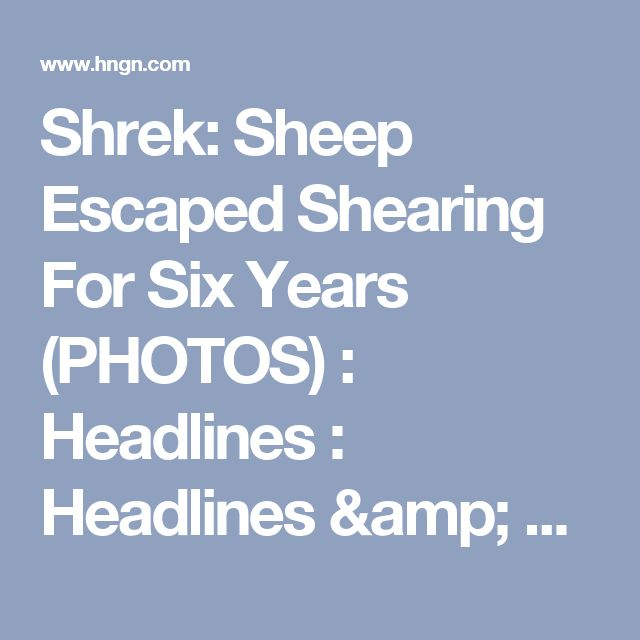 Shrek: Sheep Escaped Shearing For Six Years (PHOTOS) : Headlines : Headlines & Global News