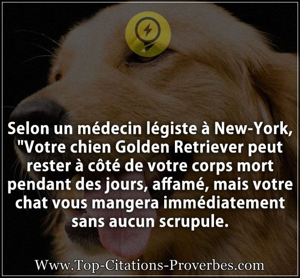 citation_chien__Selon_un_medecin_legiste_a_New-York_Votre_chien_Golden_Retriever_peut_rester_a_co_0918