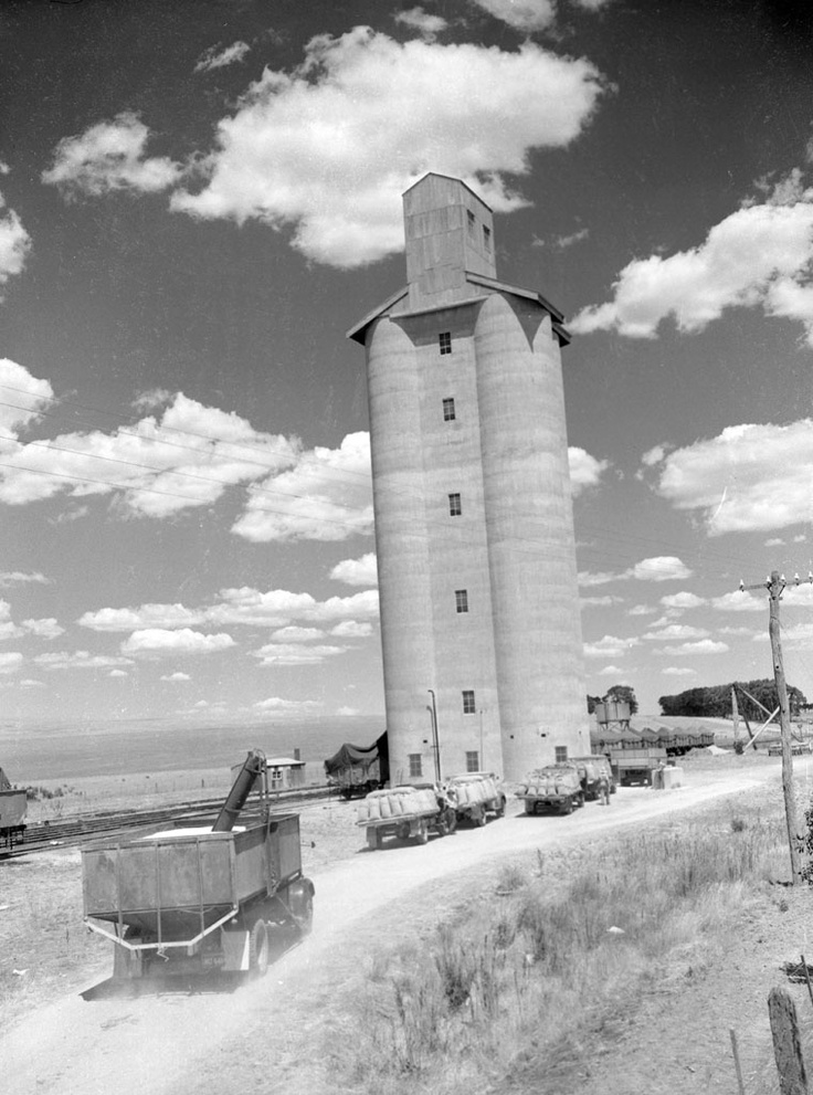 1955 Trucks unloading wheat at Willoura silo. Ararat. VicRoads Centenary 1913-2013. www.vicroads.vic.gov.au