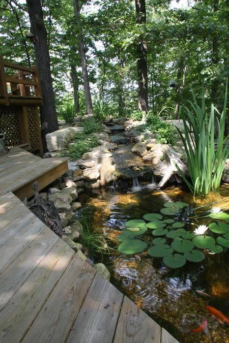 Backyard pond supplies woodworking projects plans for Backyard koi fish pond