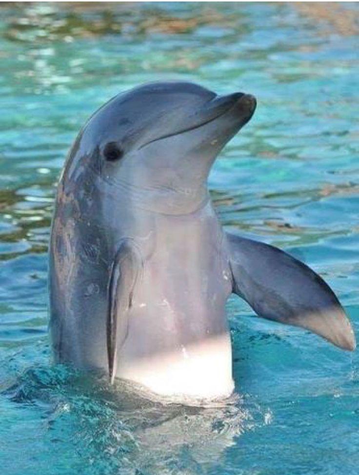 красивое фото дельфиненка гастролей