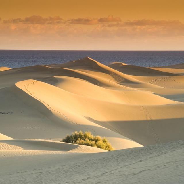 Öken + Hav =   I Maspalomas kan du hoppa från sanddyner hela vägen ner i havet    #reseguiden #semester #restips #grancanaria #maspalomas #öken #sand #sahara