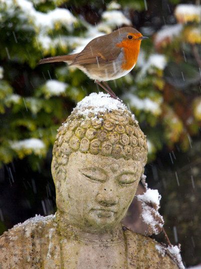In Flintshire, North Wales, a robin sits out a snow flurry on a Buddha's headPicture: Alamy The Met Office heightens weather warnings from yellow to amber as winter grips   the country
