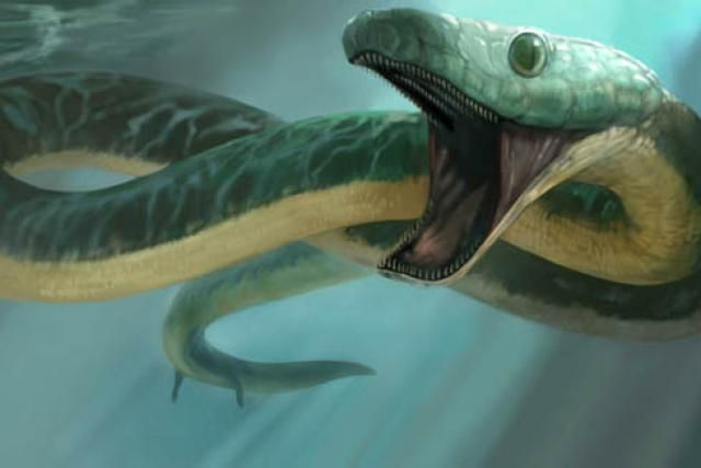 The Long, Slithering Story of Snake Evolution: Pachyrhachis inhabited the lakes and rivers of the early Cretaceous Middle East (Karen Carr)