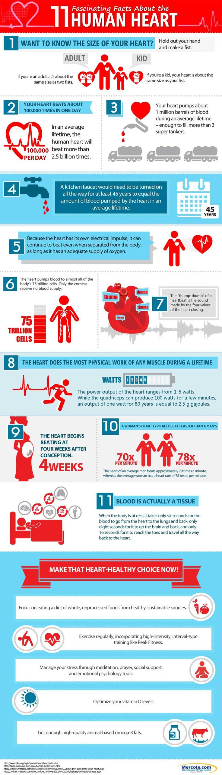 17 best images about the human heart heart disease the 11 interesting human heart facts in this infographic will help you to better appreciate this