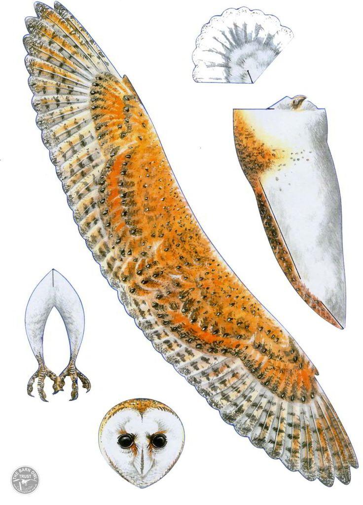 Print Barn Owl mobile part 1