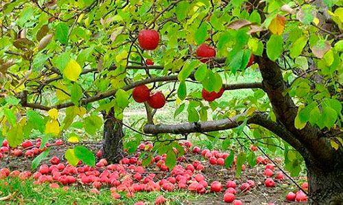 Чем обработать плодовые деревья осенью: забота об урожае