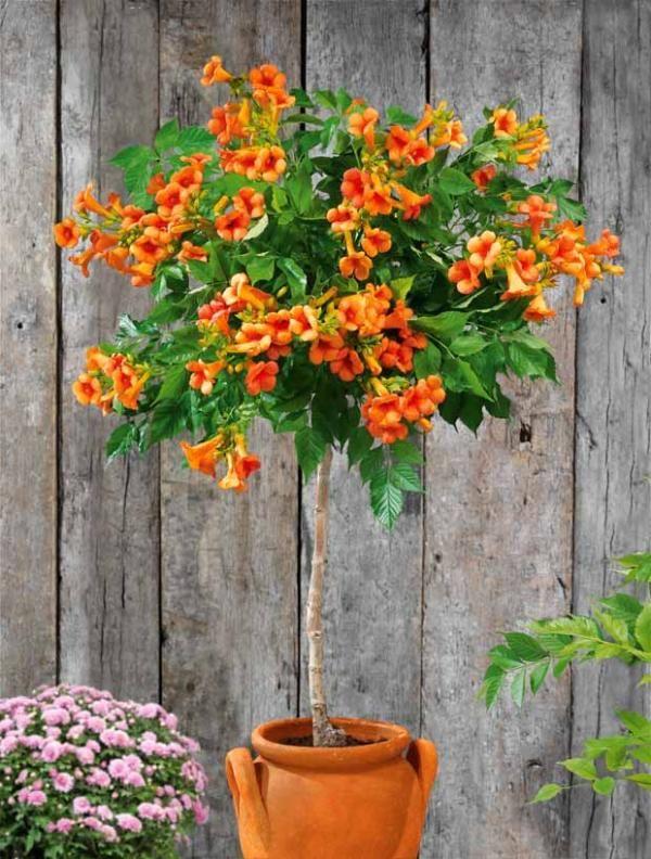 Les 25 meilleures id es de la cat gorie croissance rapide arbustes sur pinterest culture de - Arbres et arbustes a croissance rapide ...
