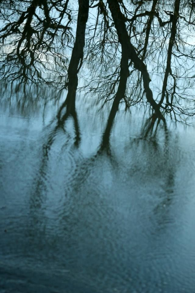 Distortion/Distortion/Reflection in water. Taken 11/01/14.