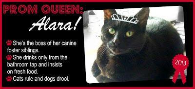 TAGS Awards: Part 1 - Alara: Prom Queen!