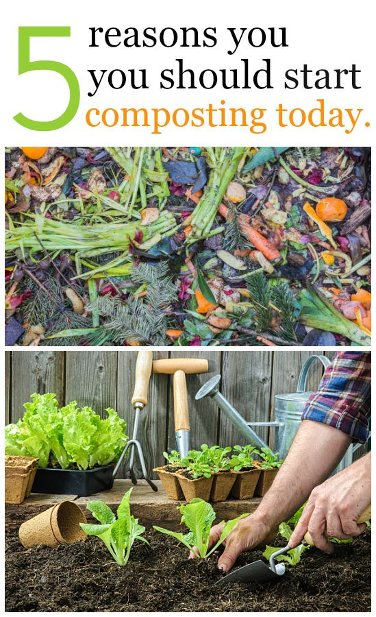 5 Reasons You Should Start Composting Today. Gardening Tips HouseholdsFrugalVegetablesBudgetBackyard Part 65