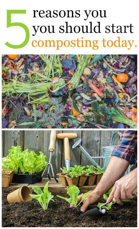 5 Reasons You Should Start Composting Today. Outdoor GardensGardening  TipsGarden LandscapingFrugalVegetablesHouseholdBudgetLandscapesBackyard