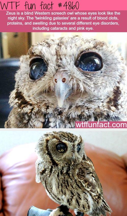 Beautiful eyes so sad he is blind
