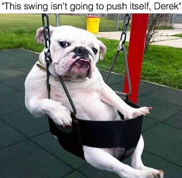 Funny Animal Pictures Of The Day – 23 Pics