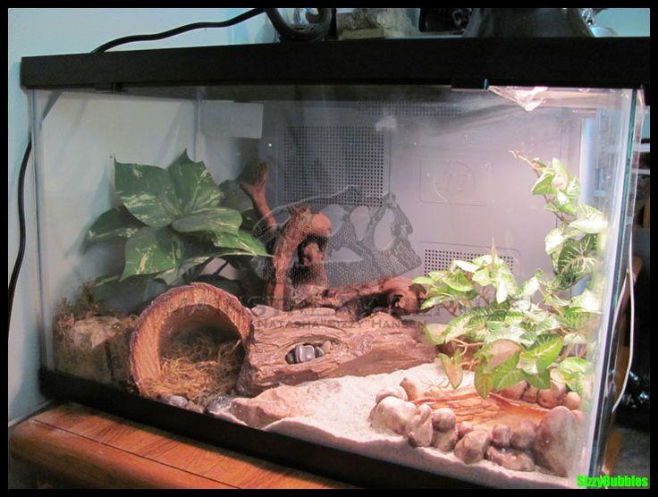 Leopard Gecko Terrarium by SizzyBubbles.deviantart.com on @deviantART