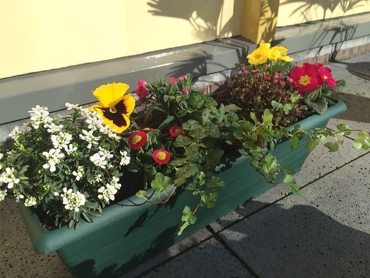 Windowbox, Blumenkasten, plantenbak