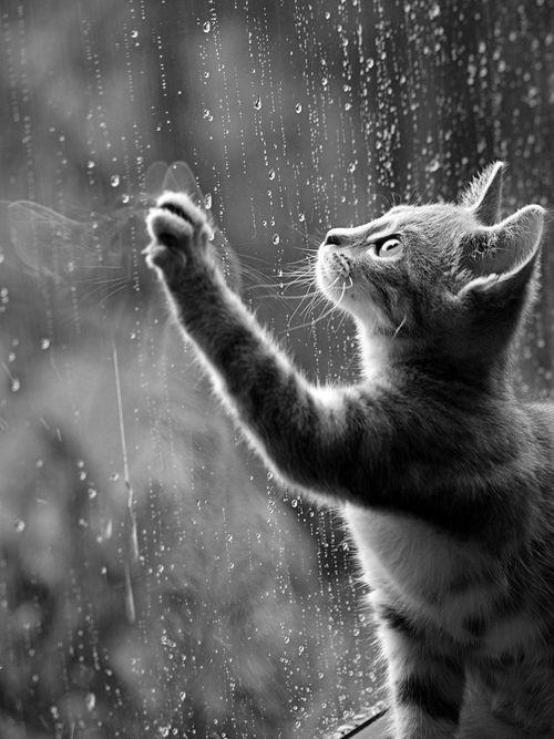 schwarz/weiß black/white #catart #cat #katze