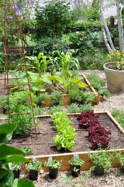 I plan to increase the # of raised garden beds in my backyard...it's all about decreasing lawn space & building it into something fruitful.