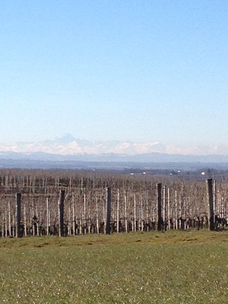 La catena alpina vista dal Poggio di Gavi