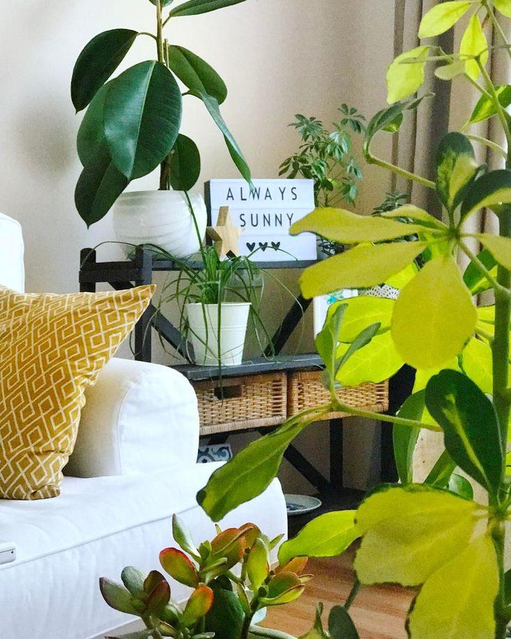 """82 kedvelés, 11 hozzászólás – Emese (@twinstahome) Instagram-hozzászólása: """"Nő a bukszusannyira jó rájuk nézni#plants…"""""""