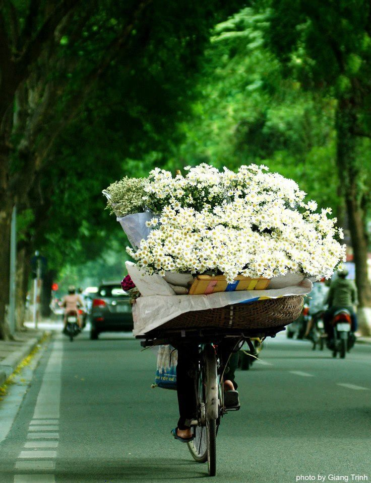 Vietnam....love this look. Can see an old bike with oodles of flowers at reception entry.