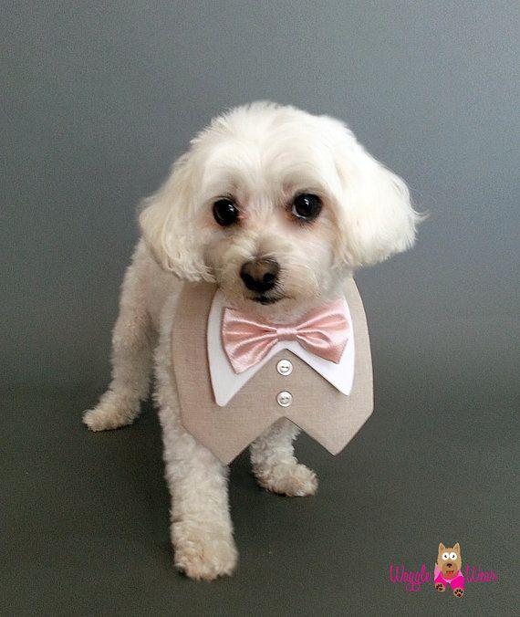 10 best Wedding Attire for Dogs images on Pinterest | Dog tuxedo ...