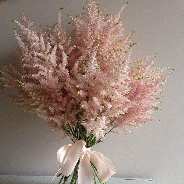 Astilbe. #aschajolie #astilbe #bouquet