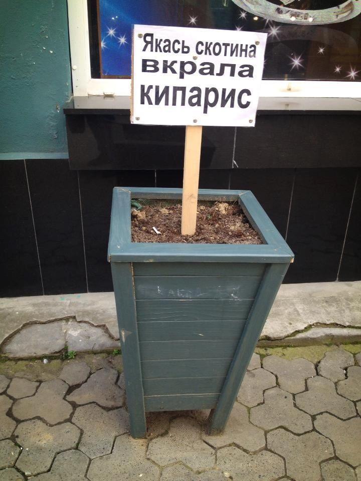 Визмаильском сквере вандалы похитили недавно высаженные растения  | Новости Одессы