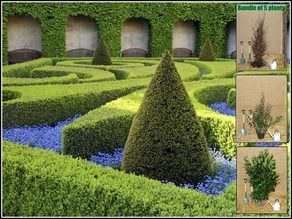 Hedging Plants, Hedges & Garden Hedging Plants Online