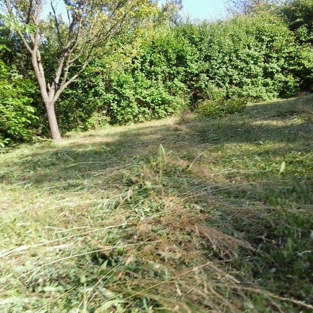 Frissen kaszált fűben fetrengés                     ketcica készítette ezt a képet.