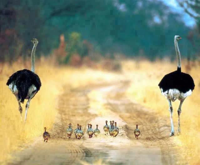 Mijn oma is dol op struisvogels want ze zijn zo grappig!