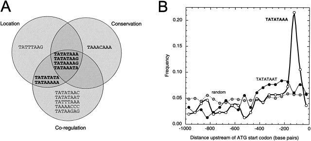 Identification and Distinct Regulation of Yeast TATA Box-Containing Genes
