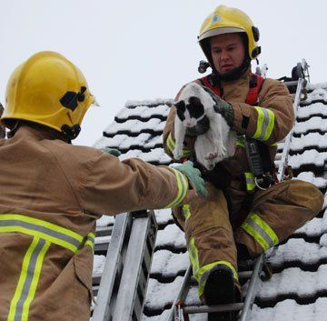 This cat was stuck on a snowy roof for over 18 hours in Great Sankey, Warrington, England, according to Warrington Worldwide. Using two ladders, firefighter Stuart MacKenzie brought down the freezing feline.