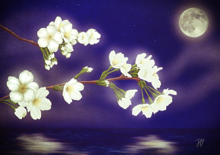Moonlight Bloom. By Jolie Byrne.