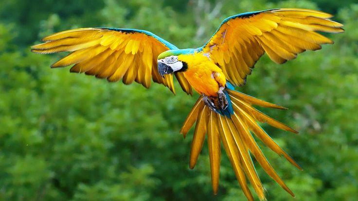Colorful Bird Parrot Flying On Sky HD Wallpaper
