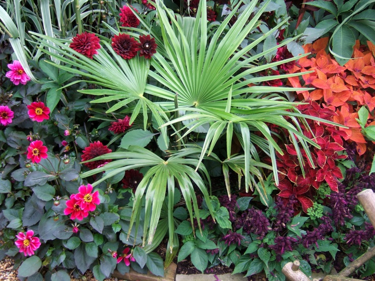1000 Images About Jungle Theme Garden On Pinterest St