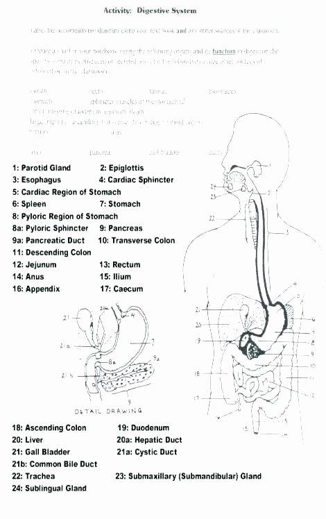 Digestive System Worksheets Middle School Grade Science ...