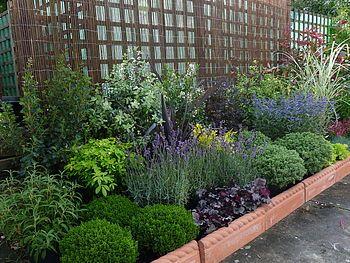Low maintenance garden border kit for Low maintenance border plants